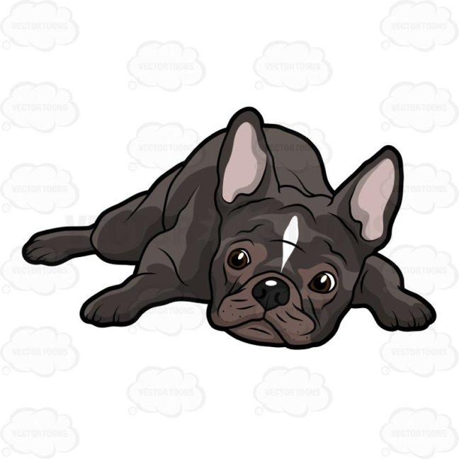 french-bulldog-collection-008[1]
